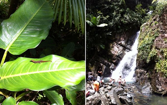 Puerto Rico Rain Forest