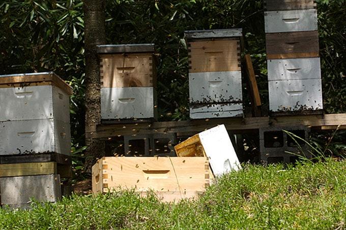 Kate S Kitchen Harvest And Honey